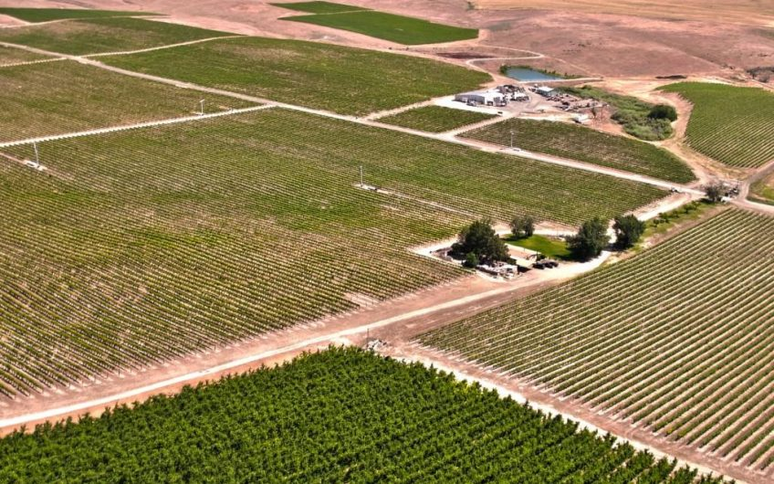 Rattlesnake Hills AVA Vineyard and Winery For Sale