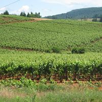 Historic Red Hill Vineyard Douglas County