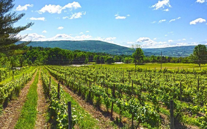 Finger Lakes Vineyard For Sale