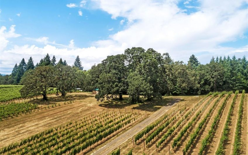 Oregon Organic Pinot Noir Vineyard For Sale