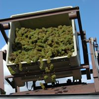 Profitable Winery and Vineyard in Southern Oregon