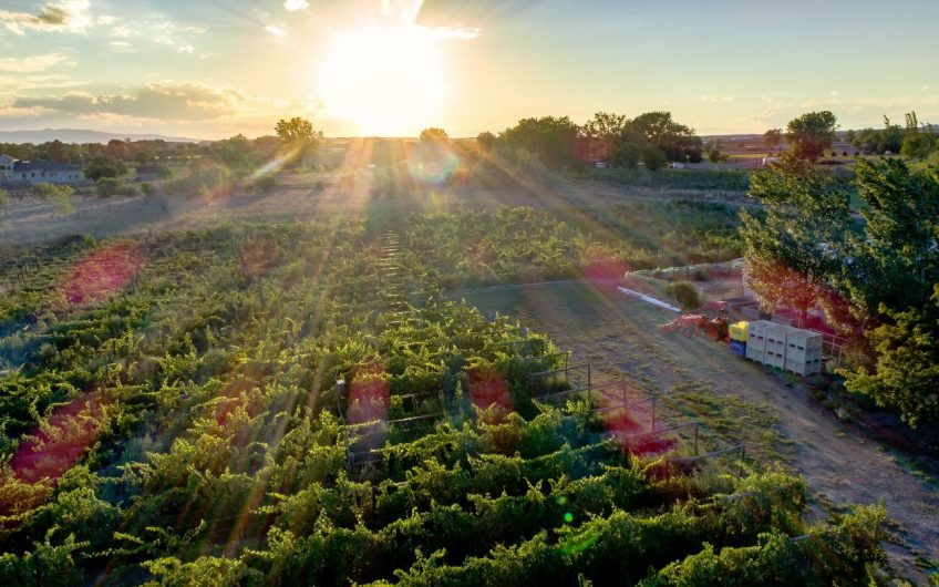 Income Producing Vineyard in Colorado Wine Country