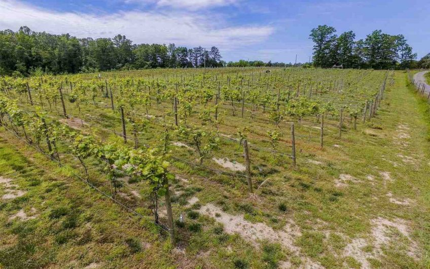 Virginia Farm Winery and Vineyard For Sale