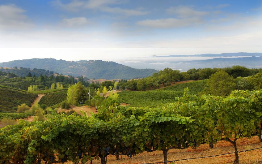 Sky-Island – Sonoma County Escape