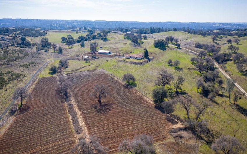 Serene Vineyard Estate
