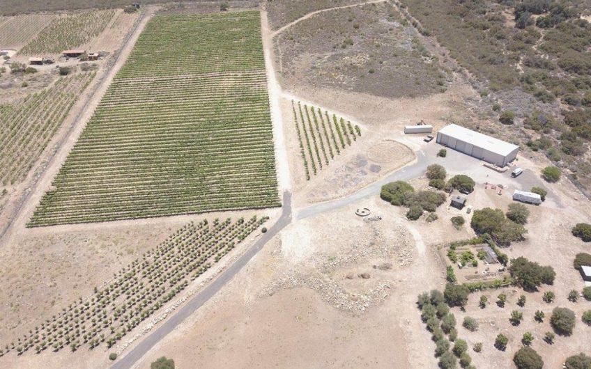 Orrin Vineyard and Winery
