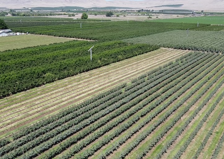 Irrigated Apple and Pear Orchard For Sale
