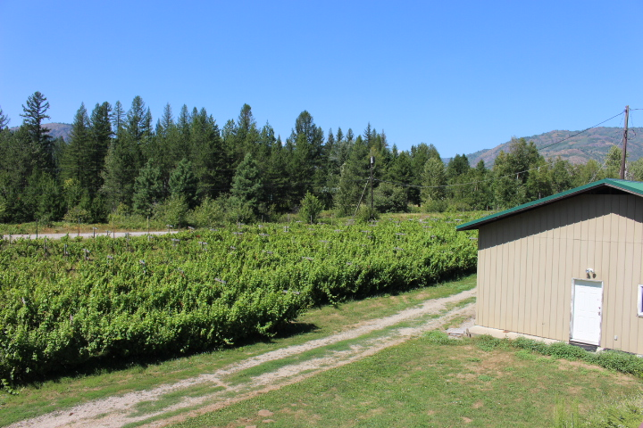 Columbia Gardens Winery For Sale