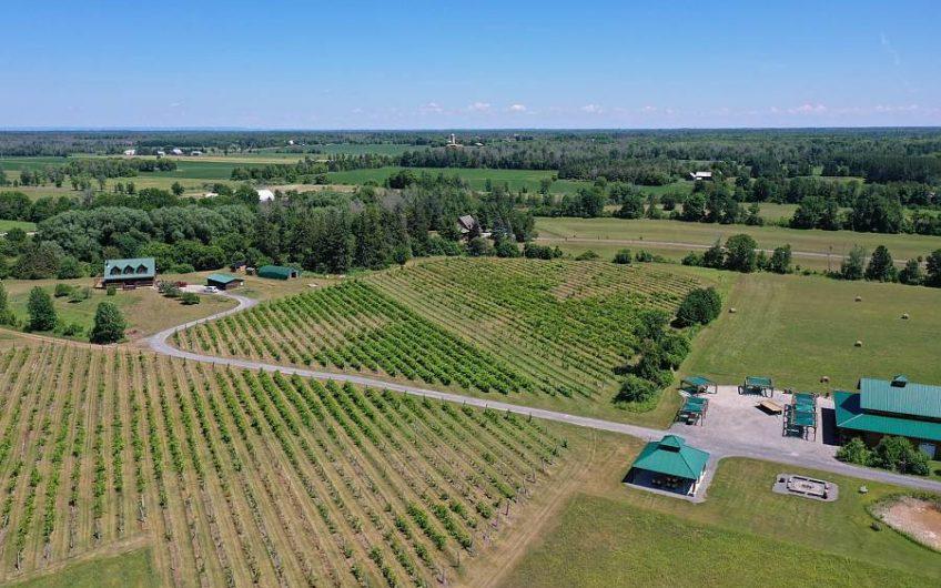Estate Winery – Jabulani Vineyard & Winery