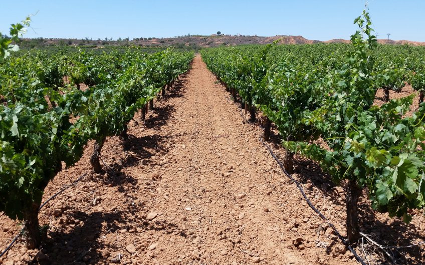 Spanish Winery For Sale - Vineyard For Sale in Spain