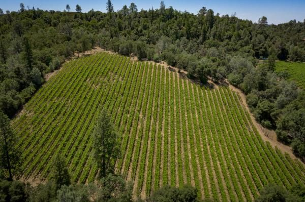 Profitable Central Coast Winery for Sale