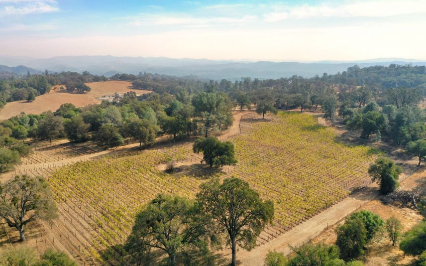 Vineyard in the Sierra foothills