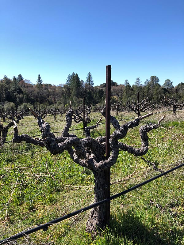 North Coast Winery For Sale